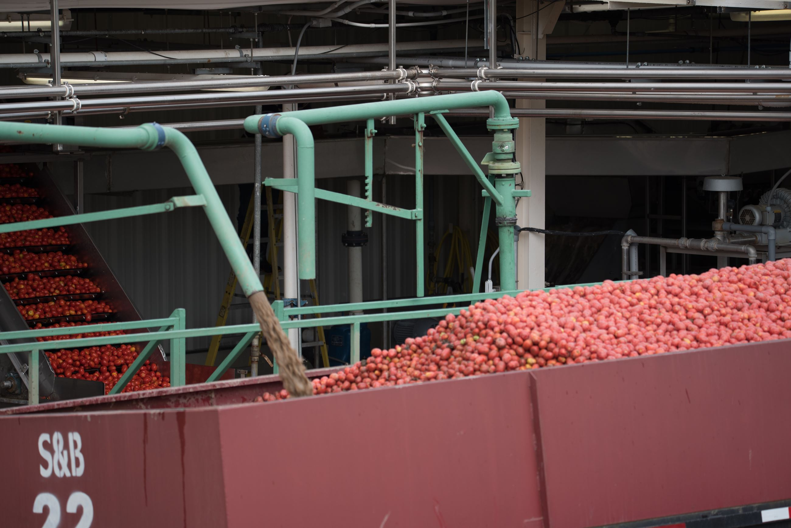 Tip Top Tomato Cannery Hopper with Tomatoes